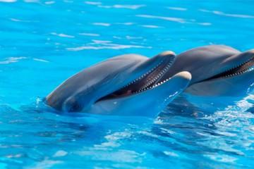 Mermaid & Dolphin Training For Kids