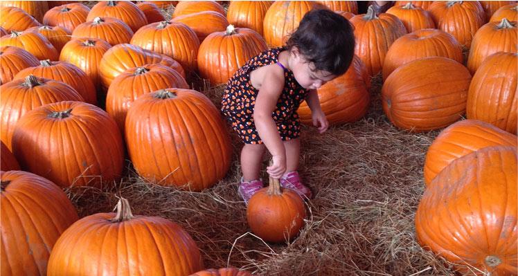 7th Annual Sarasota Pumpkin Festival