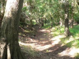 Osprey Trail Run